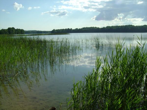 реки костромской области рыбалка